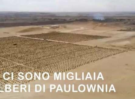 100MILA ALBERI NEL DESERTO: É LA PAULOWNIA