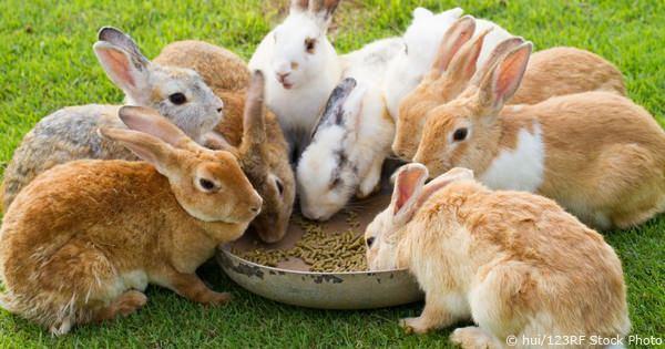 Paulownia come risorsa alimentare per animali: lo studio degli scienziati