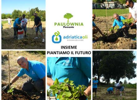 Adriatica Oli compensa la CO2 piantando decine di alberi di Paulownia