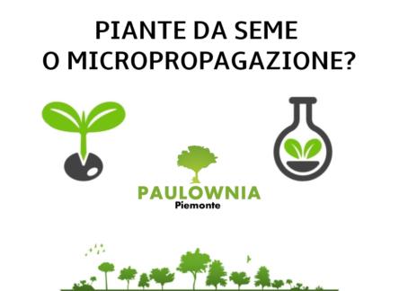 PIANTE DA SEME O MICROPROPAGAZIONE?