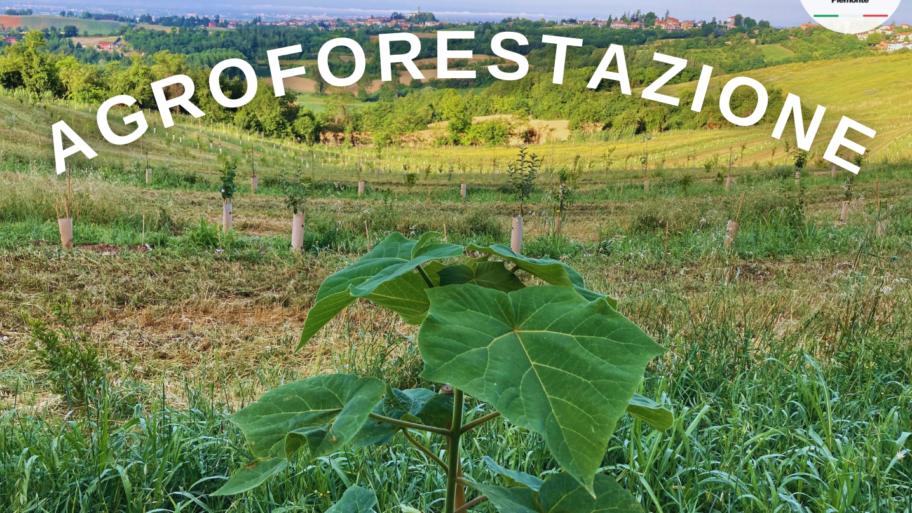 AGROFORESTAZIONE: LA PAULOWNIA COME PRINCIPALE RISORSA